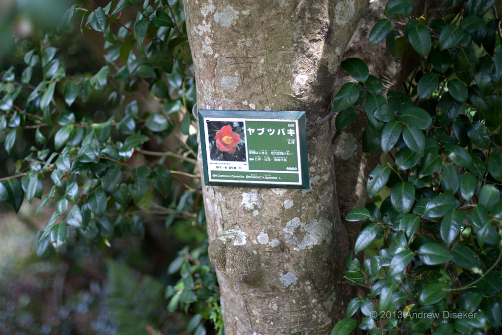 Label on flowering tree, Fukuurajima 2010