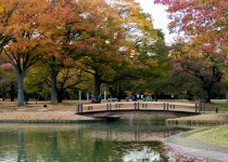 Just a little glimpse of the Autumn beauty of Yoyogi Park, in Tokyo at sunset.